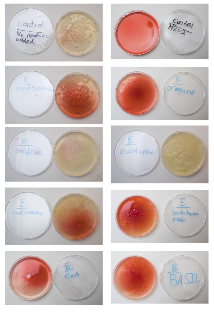 antibacterial essential oil experiment investigation test