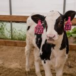 dairy farm ct small business owner photographer